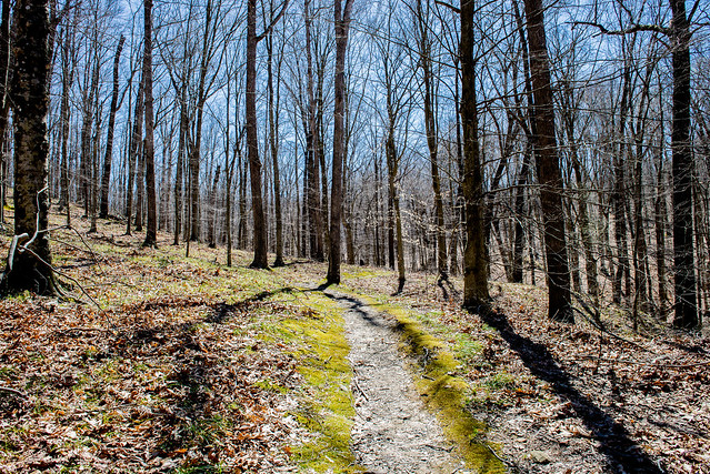 Hoosier National Forest - Nebo Ridge - April 3, 2016