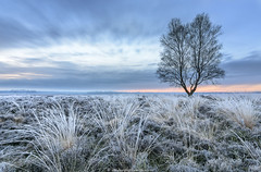 A cold morning at the Ginkelse Heide (Sander Grefte) Tags: longexposure sky cold tree ice beautiful field grass sunrise landscape boom le heath lonely gras icy veld heide landschap ginkelse ijs koud sfeer rijp zonsopkomst langebelichting sandergreftephotoscom