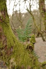 (Lakuda-san) Tags: scotland arbre lochlomond mousse ecosse luss