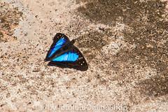 Argentinien_Insekten-66 (fotolulu2012) Tags: tierfoto