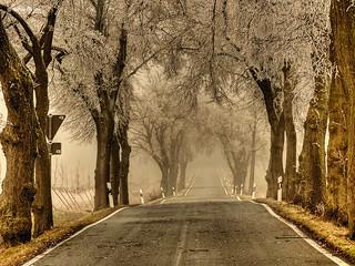 Baumallee im Nebel