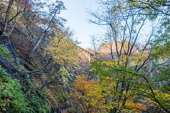 NarukoOnsen-46 (clouddra) Tags: autumn japan jp miyagiken narukogorge narukoonsen sakishi