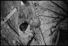 Propeller - Kodak Tri-X exp* (magnus.joensson) Tags: blackandwhite monochrome zeiss boat skne kodak sweden south 28mm trix 11 swedish contax 2009 cy rx exp distagon xtol orangefilter imacon smyge boatsatbeach