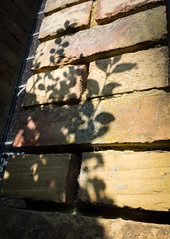 Shadows (S's images) Tags: shadow brown brick abbey leaves wall isle wight ryde quarr