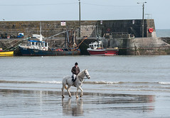 Horse fishing? (swordscookie) Tags: horse dublin man beach boats pier fishing surf exercise harbour rider failed fingal loughshinny europeanwaterstandards