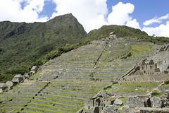 Machu Picch_terraced fields1039888 (Yori Hirokawa) Tags: peru machu picchu inca fields terraced
