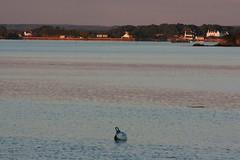 Ria d'Etel, vue prise  partir de la commune de Belz (Bretagne, Morbihan, France) (bobroy20) Tags: france paysage morbihan tourisme etel belz littoral erdeven plouhinec riadetel riviredetel