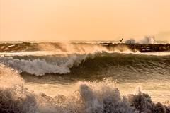 Force Of Nature (Marie.L.Manzor) Tags: ocean california sunset sea sun seascape beach water birds backlight nikon waves coastline marielmanzor nikon610