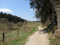 IMG_8213 (Bike and hiker) Tags: ardennen ardennes eifel hellenthal narzissen narcissen oostkantons rocherath olef krinkelt holzwarche jansbach bachtaler