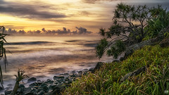 Sunrise view (BAN - photography) Tags: ocean longexposure cloud grass sunrise rocks daybreak pandanus burleighheads d810