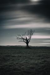 Moody loner (MistaPea) Tags: longexposure trees moon tree clouds stars astrophotography lone loner lx
