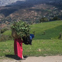 _MG_7045.jpg (felipehuelvaphoto) Tags: street trip travel viaje people respect gente morocco arab maroc medina chaouen chefchaouen marruecos jbel tetuan 2016 tetouan xauen