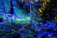 Fireflies (@Dpalichorov) Tags: blue sea tree green beautiful grass garden lights nikon projector bulgaria capture firefly seagarden fireflies bluelights varna nikond3200 greenlights d3200