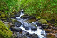 Downstream of Torc Waterfall, Killarney National Park (James Grandfield) Tags: ireland green nature water river ngc scenic kerry killarney killarneynationalpark torc torcwaterfall