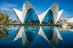 Oceanografic de Valencia (Eduardo Mena U.) Tags: espaa valencia oceanografic