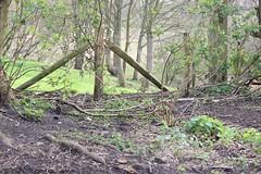 Wire Fence 1 (Wildlife Terry (Catching Up)) Tags: woodland spring watersmeet 2016 trentmerseycanal explorethis riverwheelock wheelockrailtrail wheelocksandbachcheshire wheelockbypass
