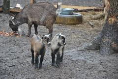 DSC_0080 (Rinswid) Tags: park nature animal spring kharkov feldman ecopark