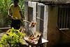 Reforma do Canil - Chácara Tangara (Foto: Naotho) (naothop) Tags: harry potter céu gato linda lingua antena livro gatinho irmã concreto pedreiro mostrando