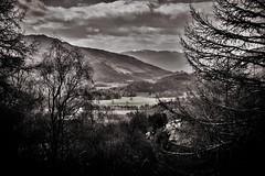 (morag.darby) Tags: blackandwhite bw mountain tree monochrome field landscape mono scotland nikon noiretblanc hill scenic nikkor comrie d3300