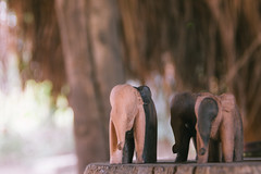 Friends (POStaes) Tags: africa wood elephant canon eos woodwork togo t3i 600d