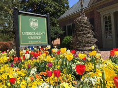 Welcoming W&M Admission (William & Mary Photos) Tags: flowers spring scenery tulips wm williamandmary admission williammary collegeofwilliamandmary collegeofwilliammary