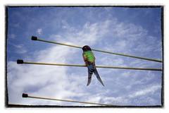 IMG_2985 smart copy (cnajhar) Tags: blue sky bird nature clouds hummingbird aves