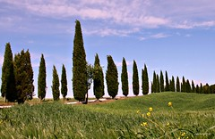 (claudiophoto) Tags: tuscany toscana valdorcia paesaggiitaliani paesaggitoscani tuscanylandscape fototoscana