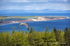 Isle of Man and Scotland (IMAGES FROM MAN.) Tags: blue trees sea sky mountains green nature scotland nikon seagull tripod telephoto birdseyeview isleofman 80200 d810