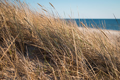 Windy (Ilia A) Tags: sea sky cold grass spring weed wind tamron 2470mm canon70d
