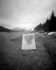Something Experimental (CraftyMoni) Tags: pinhole pinholephotography trilliumlake zero45 zero4x5