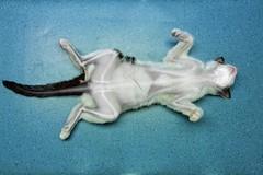 X-ray Cat (Stan de Haas Photography) Tags: pet black silhouette cat hospital skeleton skull vertebra hurt paw feline ray arm legs image head vet background teeth injury brain x medical health elbow xray bones medicine inside wrist spine clinic shoulder examine thoracic disease trauma diagnostic veterinary clinical joints diagnosis examination radius ulna roentgen radiograph cervical radiological standehaas