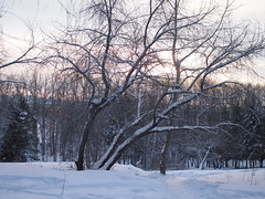 P1061312 (jasonito) Tags: winter russia olympus omsk 2016   mft  micro43 microfourthirds sigma30mmf28 epl3 olympusepl3