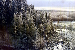 30-068 (ndpa / s. lundeen, archivist) Tags: trees winter snow color fall film ice 30 alaska 35mm river landscape nick spots pines 1970s damaged 1972 distressed coniferous alaskan dewolf discolored nenana tananavalley tananariver damagednegative nickdewolf photographbynickdewolf reel30