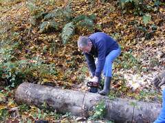 Croatia - Miocinovici - In the Woods (seanfderry-studenna) Tags: autumn trees people men nature water leaves rural forest work river mushrooms outside countryside woods october stream workmen natural outdoor traditional country working logs croatia cutting axe males funghi persons tradition custom tractors firewood trailers croatian hrvatska 2015 hatchets axemen chainsaws miocinovici