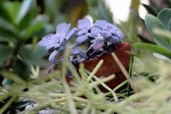 Hidden (Starfreak611) Tags: plant nature floral succulent greenhouse pottedplant