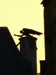 Angel (Jrg Paul Kaspari) Tags: roof detail church angel dom ange kirche dach trier februar 2016 trierer domstpeter triererdom domengel
