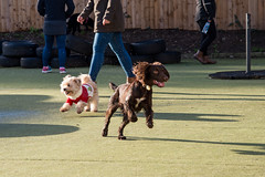 ACTION PETZ CHRISTMAS PARTY (Action Petz!) Tags: park uk dog dogs wales puppies south cardiff canine christmasparty bark dogpark dogphotography dogparty doggydaycare dogfun actionpetz