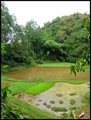 Sulawesi - Londa (abudulla.saheem (visiting Zhong-guo)) Tags: indonesia lumix panasonic sulawesi ricefields indonesien londa tanatoraja reisfelder rantepao tanahtoraja torajaland abudullasaheem dmctz31