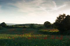 DSC04563 (wheelsy1) Tags: walking derbyshire poppy chesterfield sheepbridge poppyfield unstone richardwiles