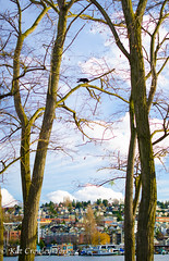 Eating an Apple (kcrowleyyork) Tags: crows gasworkspark