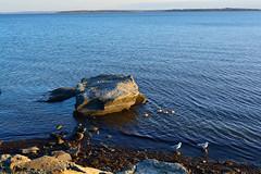 Rock and Ocean (E. Aguedo) Tags: ocean park new england seagulls point island rocks rocky ducks rhode warwick
