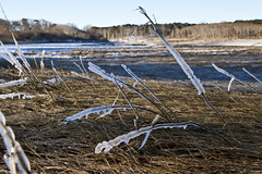 Sea Ice on marsh Grass (brucetopher) Tags: ocean winter sea snow cold ice water river landscape frozen stream wind marsh icy frigid saltmarsh seaice snowscape winterlandscape extremecold winterscene coldwinterlandscape