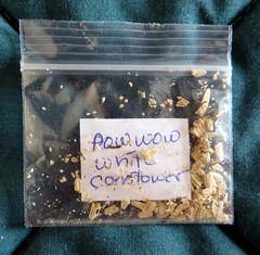 PowWow Echinacea Seeds (genesee_metcalfs) Tags: flower garden echinacea seeds herb