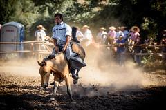 Domadura de Caballos (Ricardo Martinez Fotografia) Tags: chile horse caballos nikon costumbres cultura trilla callelarga chilenidad d810 domadura ricardomartinez