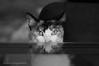 """You can never own a cat; in the best case it allows you to be your companion."" Harry Swanson (susodediego ) Tags: lúa gato gatto cat chat katze nikond300 sigma50mmf14dghsmart bn bw pet infinitexposure autofocus innamoramento gününeniyisi vpul01 frameit catmoments thegalaxy simplysuperb madridcitymola blackandwhite vividstriking"