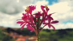 substantial (Rodrigo Alceu Dispor) Tags: flower macro insect ant fx substantial
