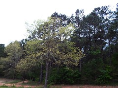#etx #woods #pinewoods #nature #trip (tonycumstains) Tags: trip nature woods etx pinewoods