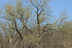 What people drive by (pdecell) Tags: trees spring lawrencekansas
