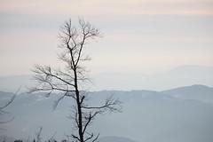 IMG_1651 (stephanie.thoma) Tags: winter black tree forrest mummelsee