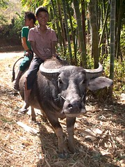 Boys on a Water Buffalo, Shan State, Myanmar, 2016 (deemixx) Tags: myanmar waterbuffalo shanstate
